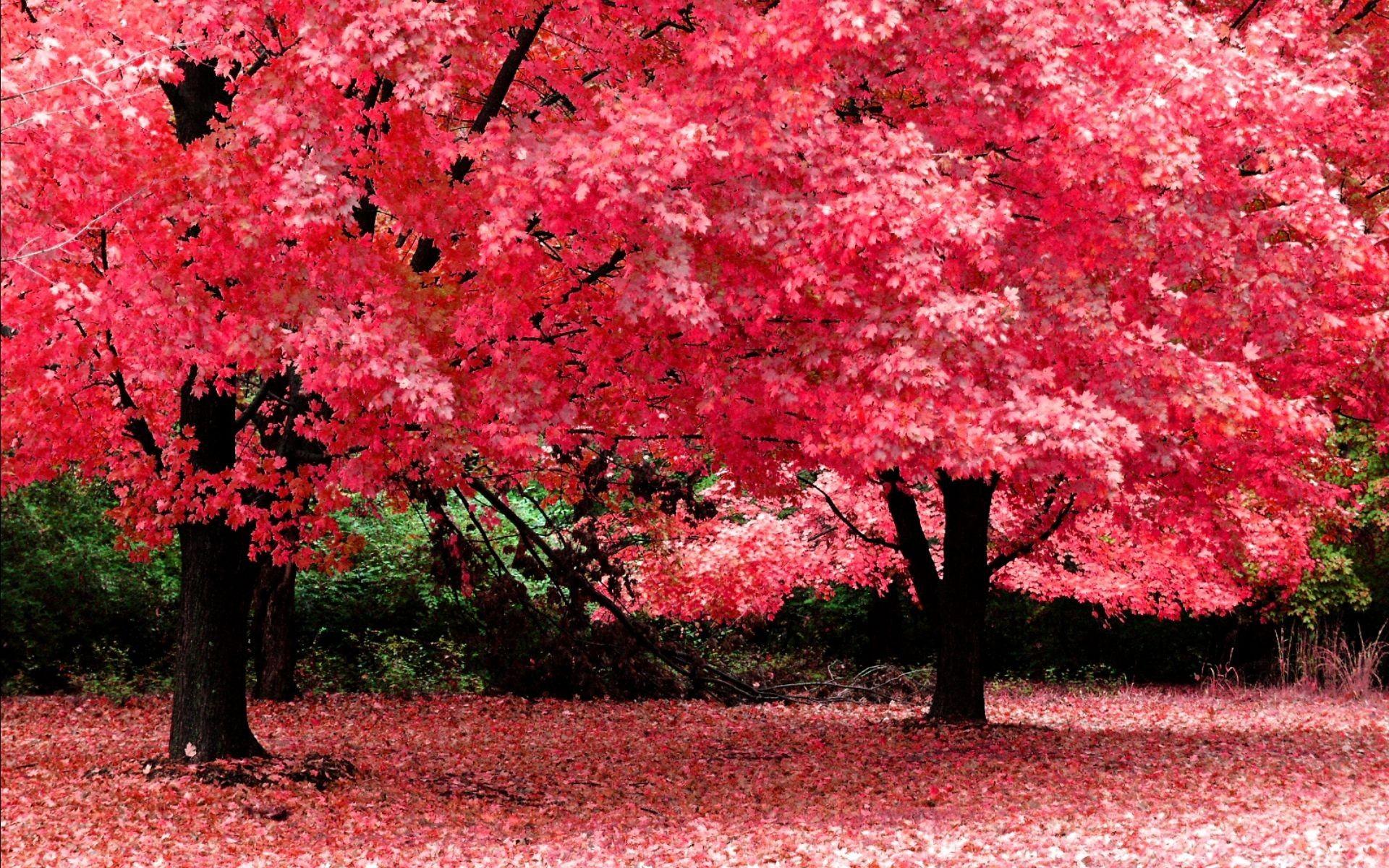 Inspirational Beautiful Nature Wallpaper Free Download For Mobile Wallpaper Laptop