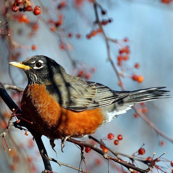 Feeding Wild Birds: A Guide To Seed Types | Backyard birds ...