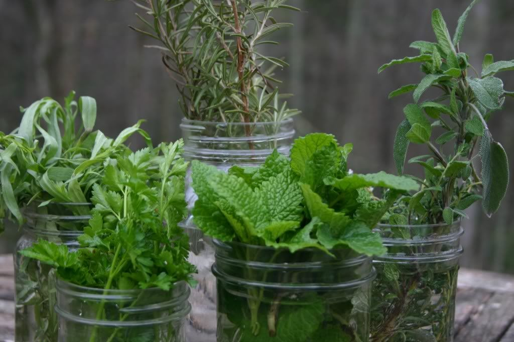 Herb Garden Inspiration Ideas Over 50 Pots Planters And