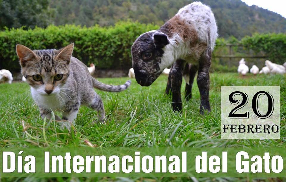 Día Internacional del Gato - 20 Febrero