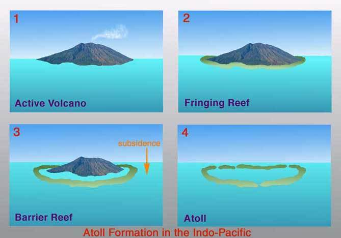 Types Of Coral Reef Google Search In 2020 Coral Reef Atoll Marine Plants