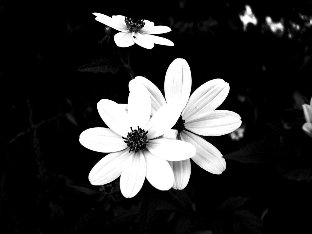 Photography White And Black Black and white city, Black