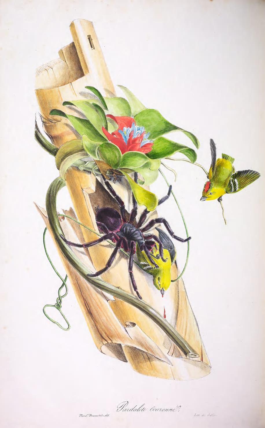 Oiseaux brillans du Brésil. - Biodiversity Heritage Library