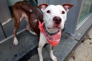 TO BE DESTROYED 09/07/16 **ON PUBLIC LIST** A volunteer writes: Burger got a