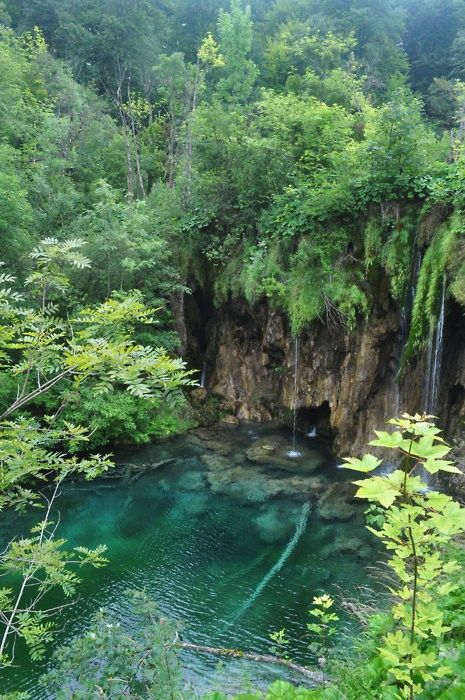 This reminds me of the secret cenote in the jungle near Akumal