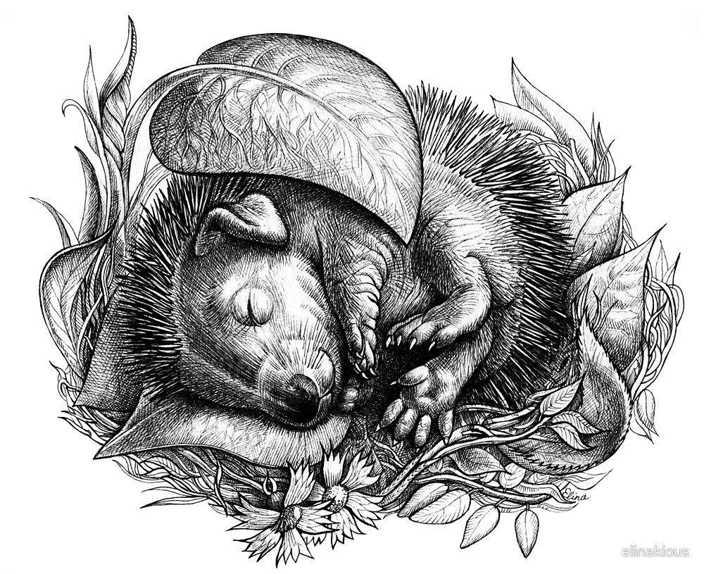 Baby Hedgehog Sleeping By Elinakious Animal Drawings Hedgehog Art Colorful Art