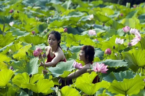 Vietnamese girls charming with lotus flowers a glimp of vietnam vietnamese girls charming with lotus flowers mightylinksfo