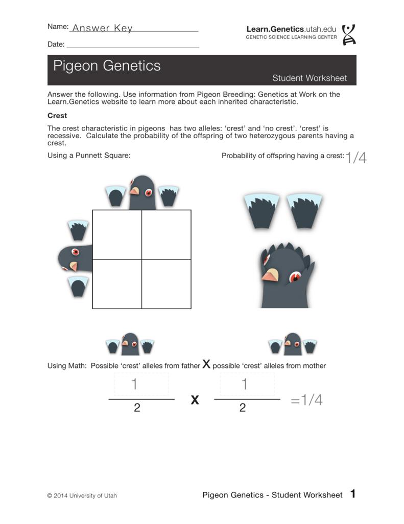 Chicken Genetics Worksheet Animal Mendelian Diagram Chickens Vintageprintable General Pinterest Worksheets And 791x1024