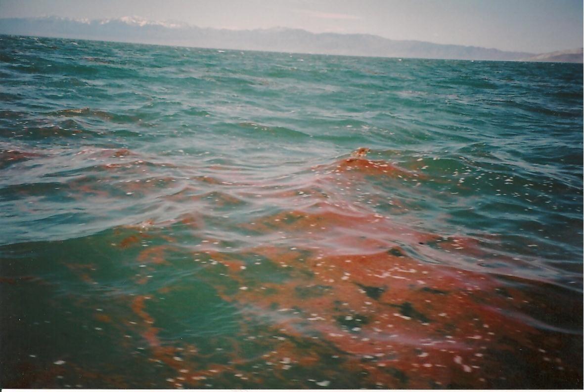 Brine Shrimp Egg Slick Great Salt Lake Pinterest Artemia Instant Eggs As