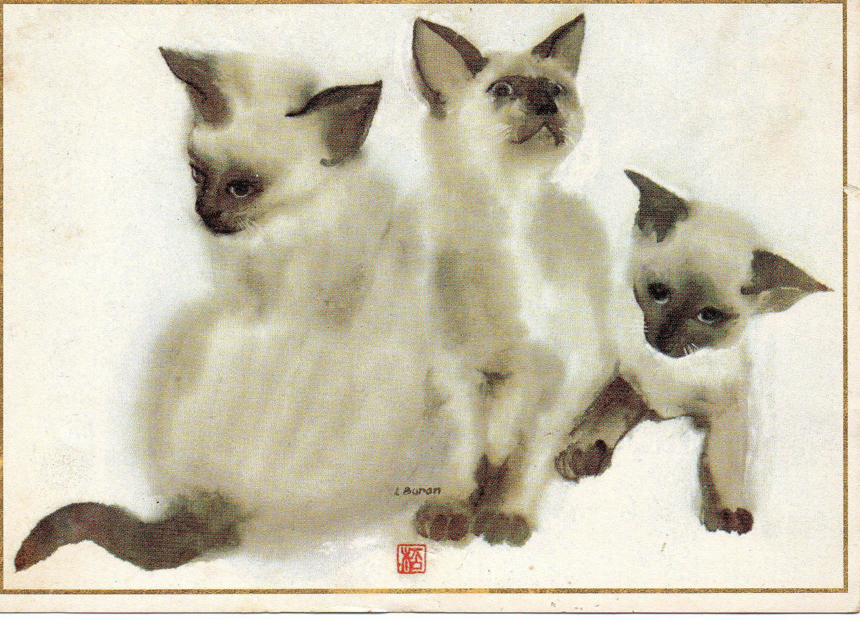 Liliane Baron | Cat Art Siamese and Oriental | Siamese ...