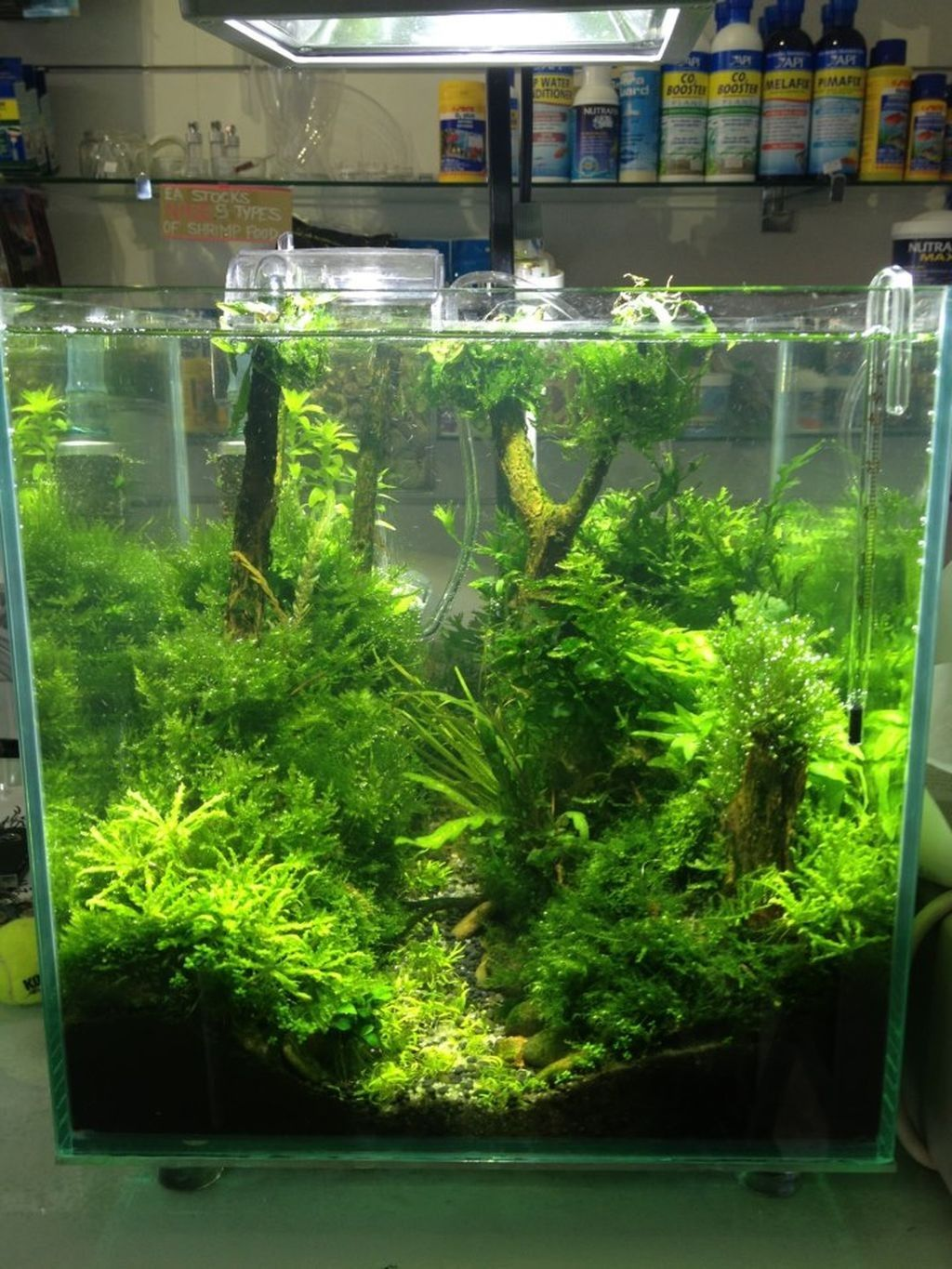 27+ Awesome Aquascaping Ideas You Will Totally Love ...