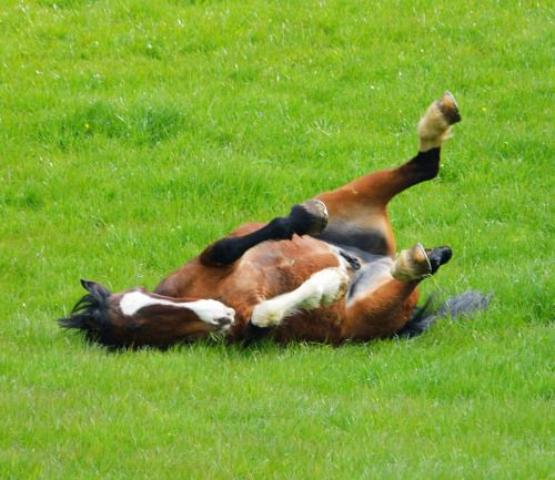Retired police horse out to grass