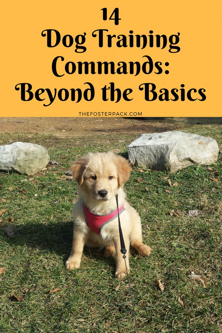 14 Dog Training Commands Beyond The Basics The Foster Pack In 2020 Dog Training Dog Training Techniques Basic Dog Training