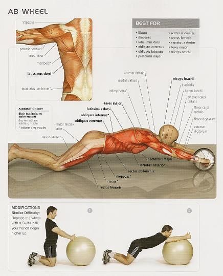 Ab Wheel physiology and substitute ball excersize Excellent diagram