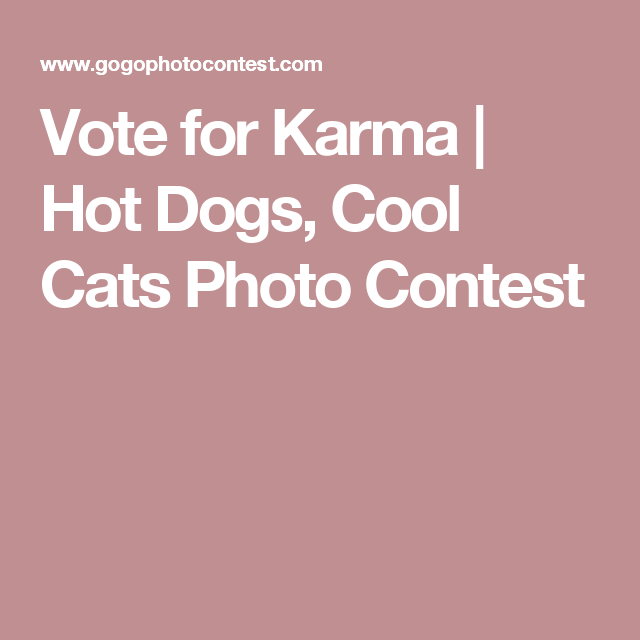Vote for Karma | Hot Dogs, Cool Cats Photo Contest