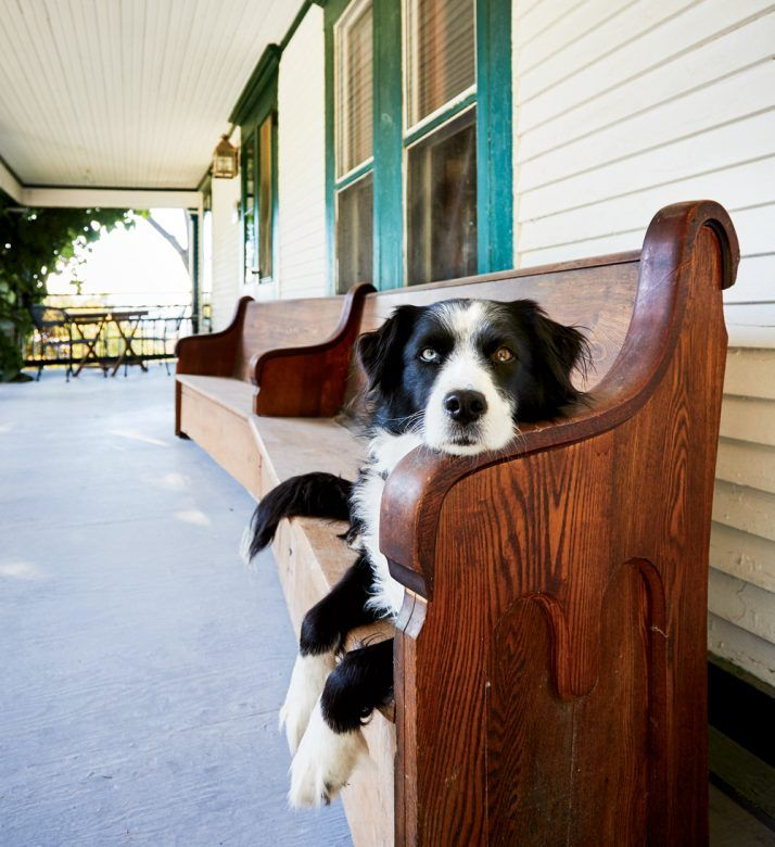 Favorite Pet Friendly Lodging In New England In 2020 Dog Friendly Vacation New England Travel New England