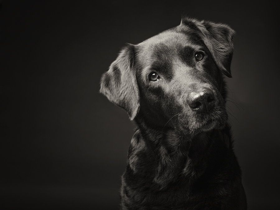 How to take dog portraits. Some very unusual ones shown, but good tips and