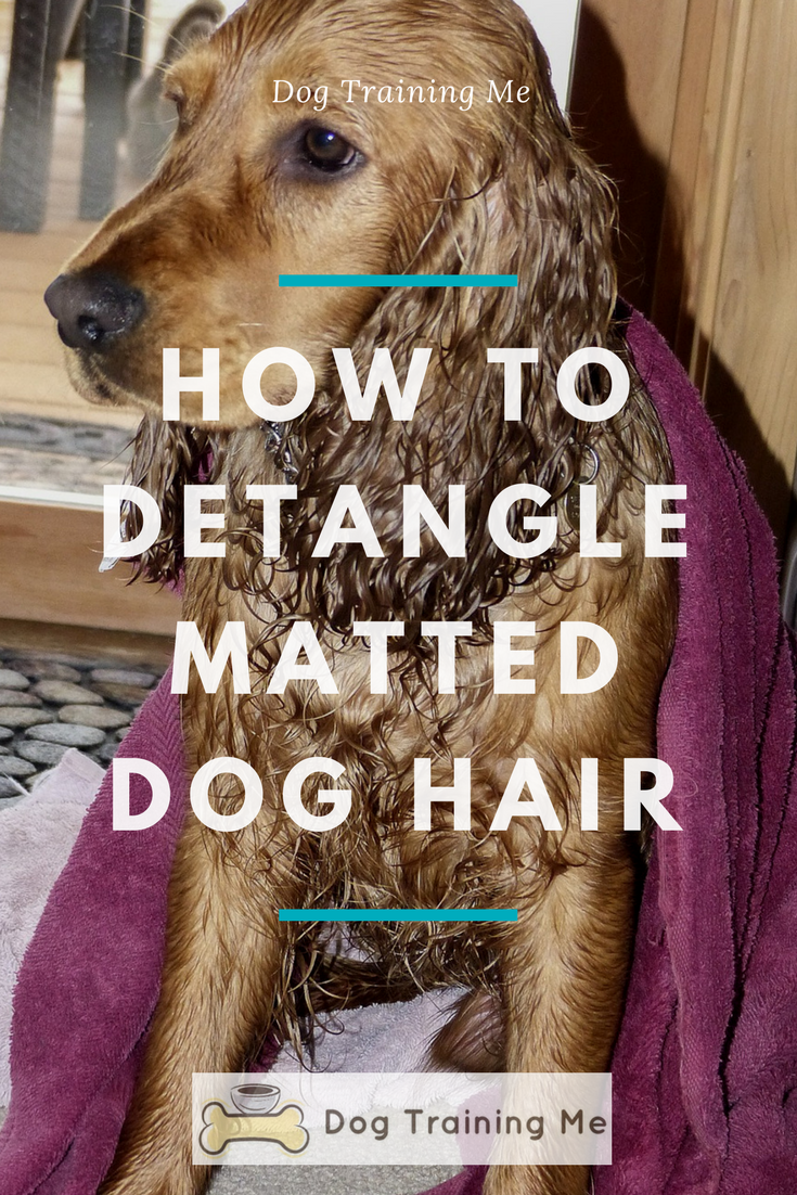 How To Detangle Matted Dog Hair We Show You Some Of The Best Equipment To Use And How To Get Rid Of Your Dog S Mats Easily W Matted Dog Hair Dog