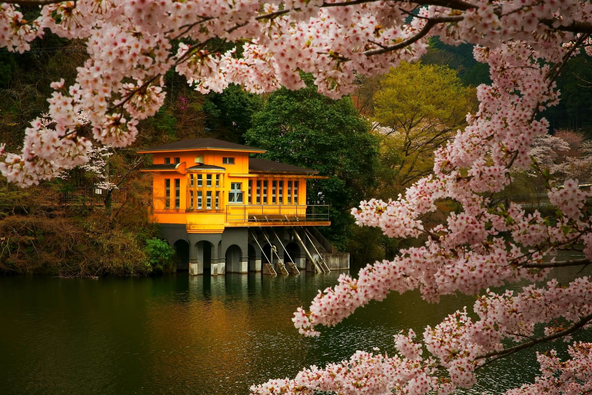 Brown And Orange House Cherry Blossom Trees Spring Lake Flowers Japan Nature Landsc Spring Desktop Wallpaper Orange House Desktop Wallpapers Backgrounds