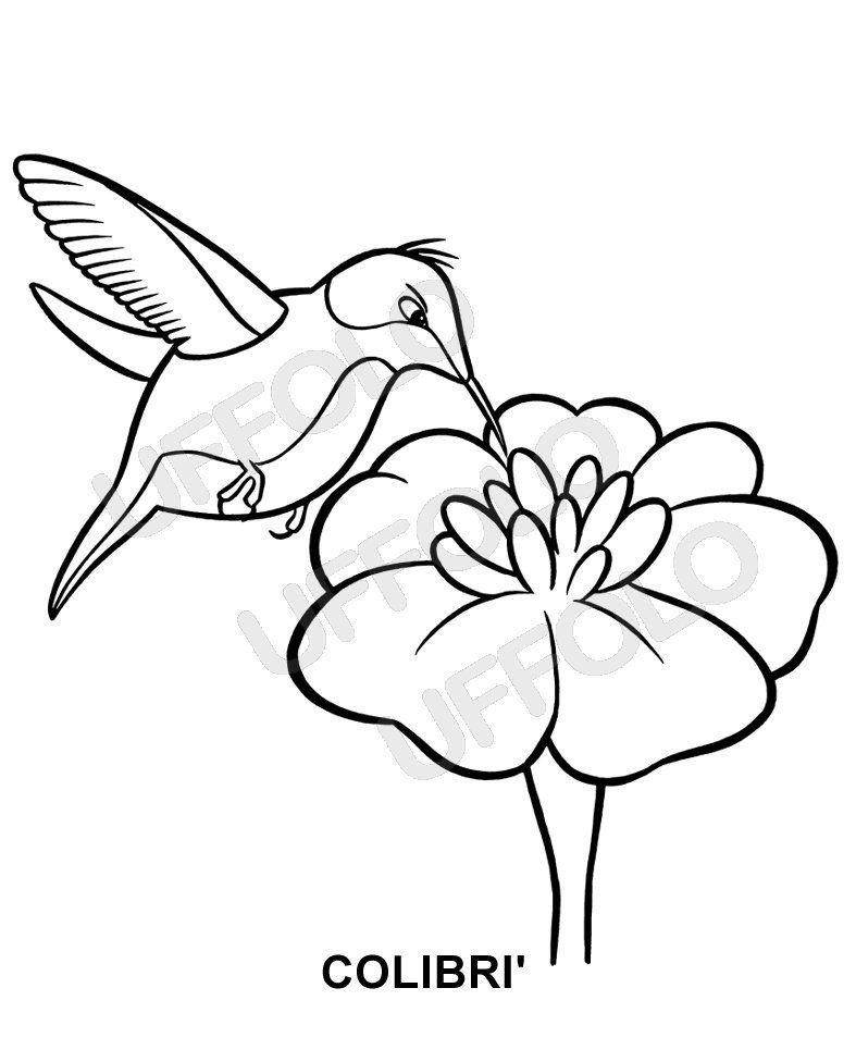 disegni immagini da stampare e colorare - Uccelli e volatili di ogni specie   Uffolo