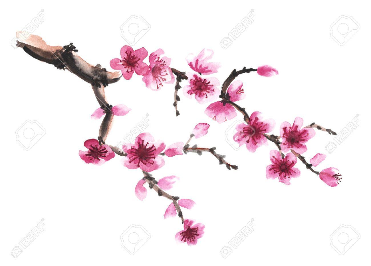 Branche Aquarelle Dessinee A La Main De Sakura Isole Sur Blanc Fleur De Cerisier Dessin Art De Fleur De Cerisier Fleur De Cerisier