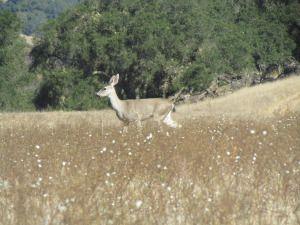 doe, a deer :)