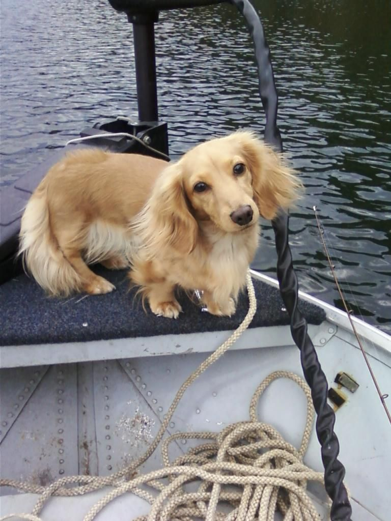 Fishing Recommend By Http Www Fishinglondon Co Uk Dachshund
