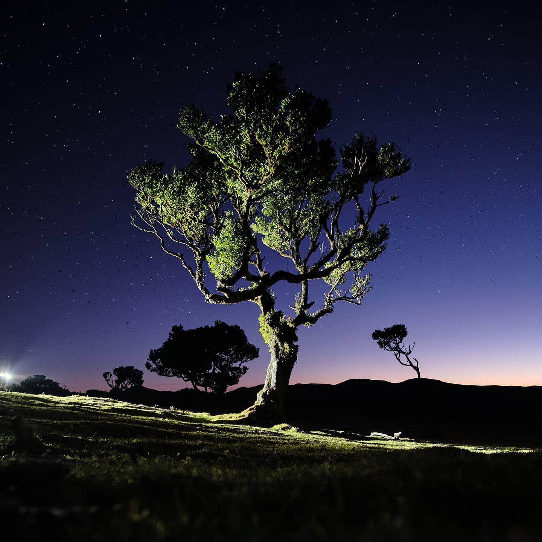 Caption This .  Fujifilm X-T30  XC35   ƒ/2   10s   35mm   ISO1000 Madeira Portugal  10th of March 2020 . . . . . . . @natgeonl @super_portugal @bbctravel @lexarmemory @bbcearth @visitmadeira  @ig_shotz_trees @tree_brilliance @fujifilm.focus @fujifilm_global