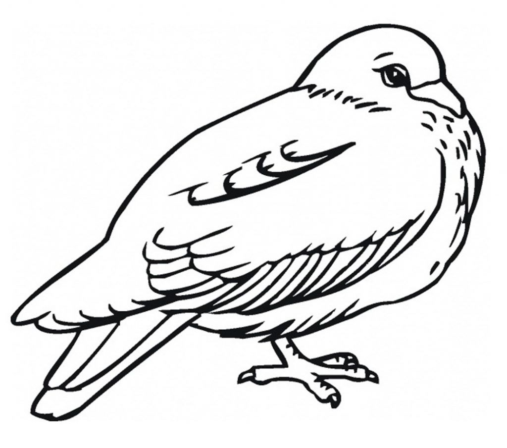 Coloring Pages of Pigeon | Animal Coloring Pages | Pinterest
