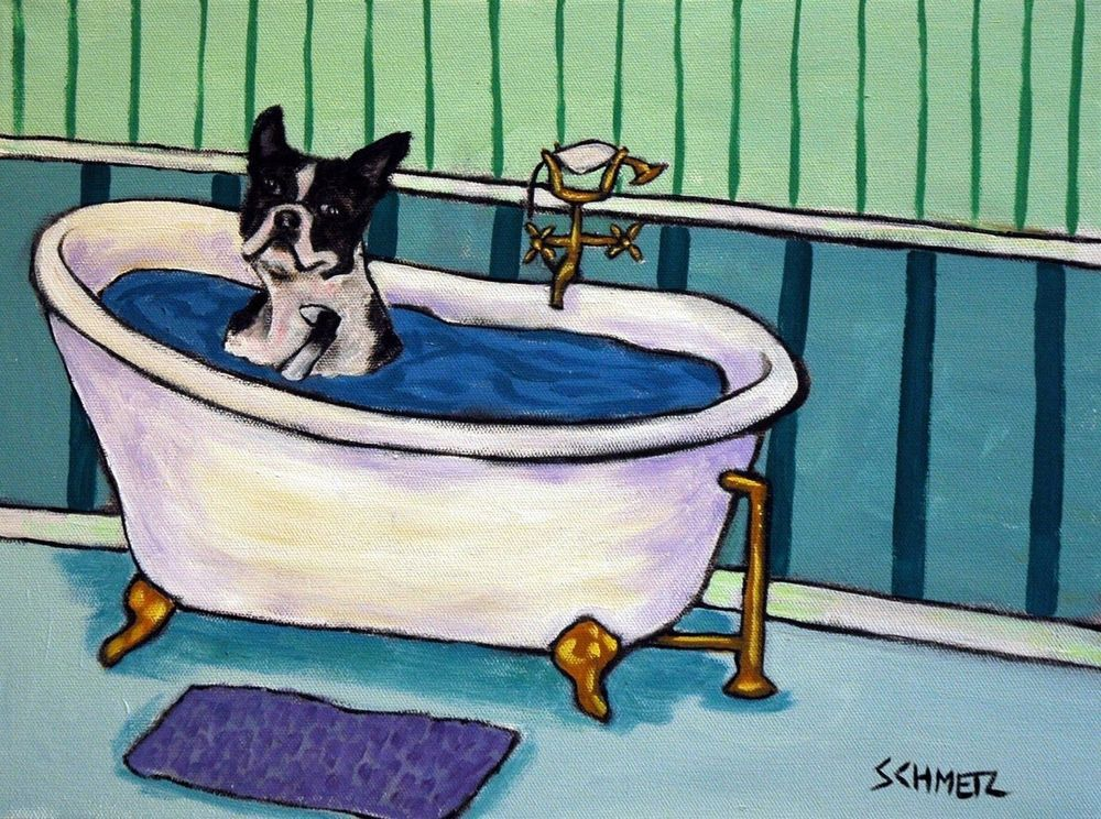 BOSTON TERRIER taking a bath  dog art print 4x6