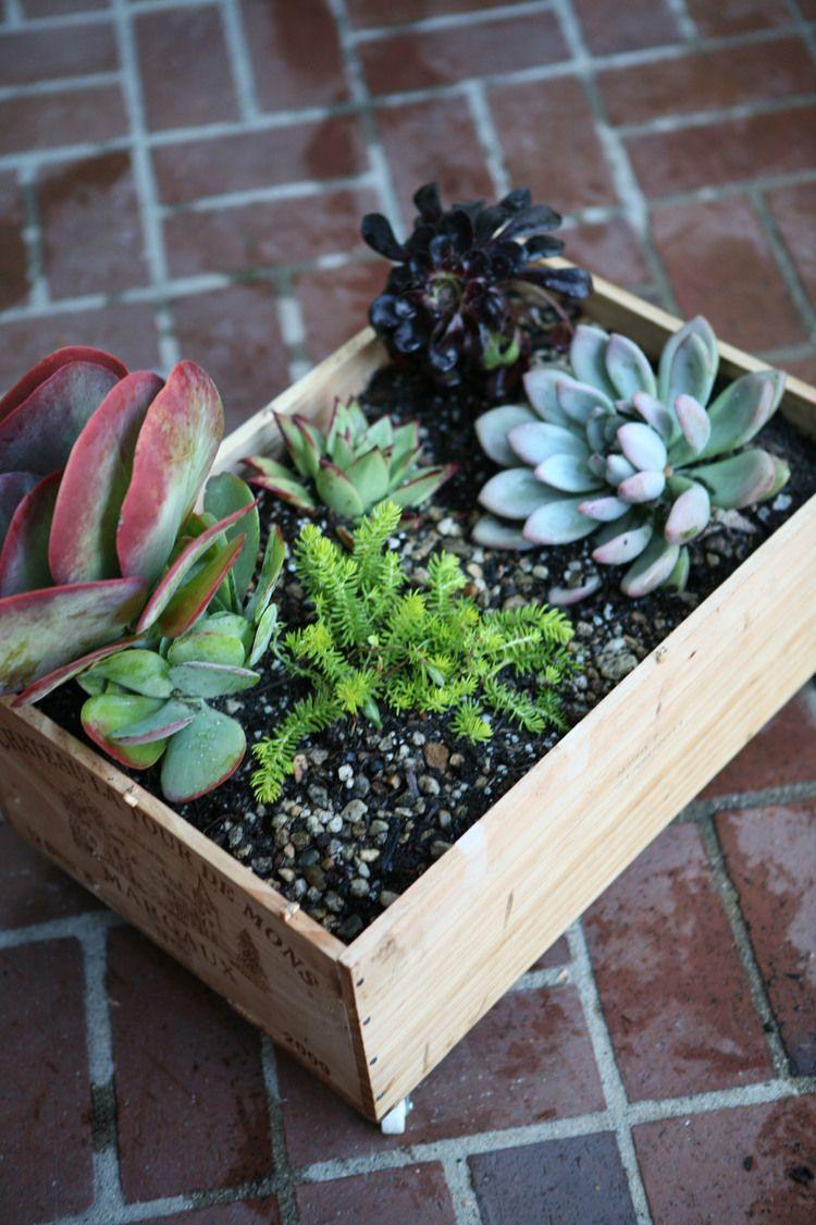 Planter Dans Une Caisse En Bois oh my! these #diy wine crate planters@deborah - my life