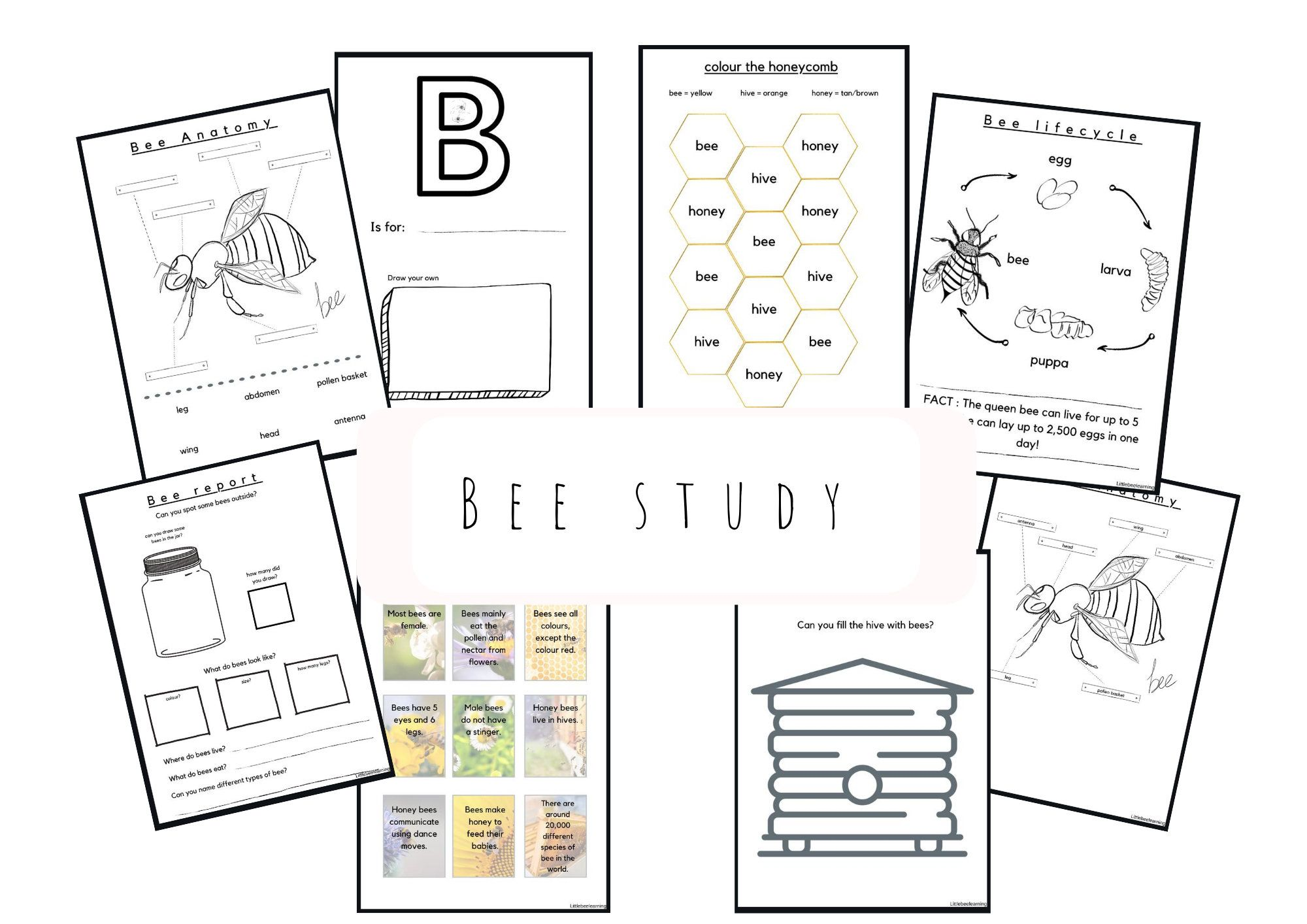 Bee Study Homeschool Worksheets For Pre School Early