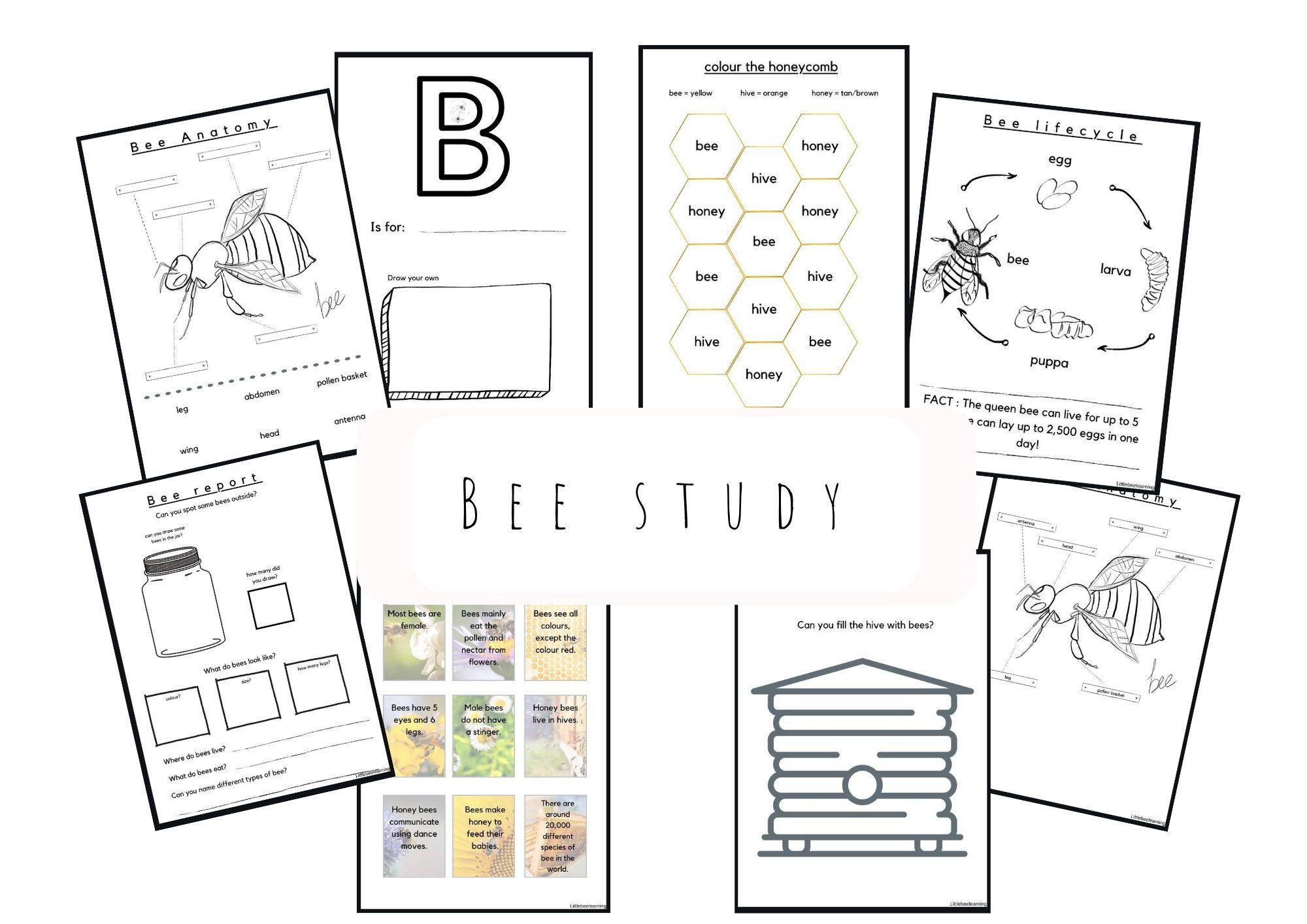 Bee Study Homeschool Worksheets For Pre School Early