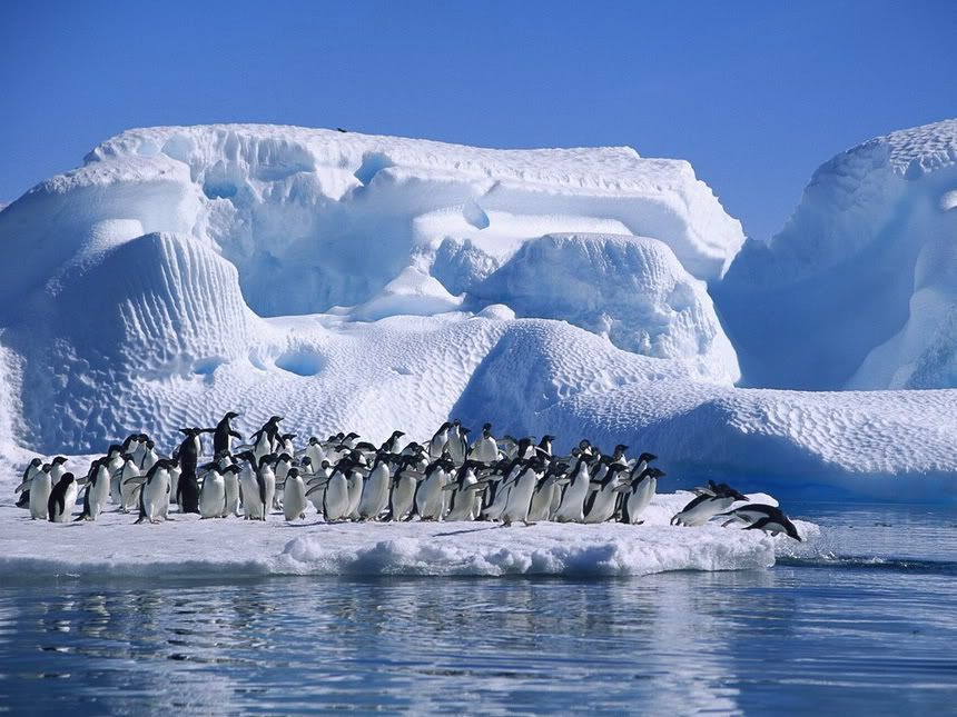 Antarctica....Penguins