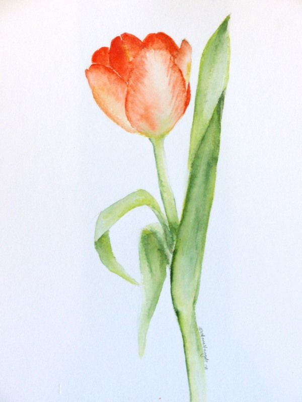 9297113 Orig Jpg 600 800 Watercolor Tulips Flower Painting