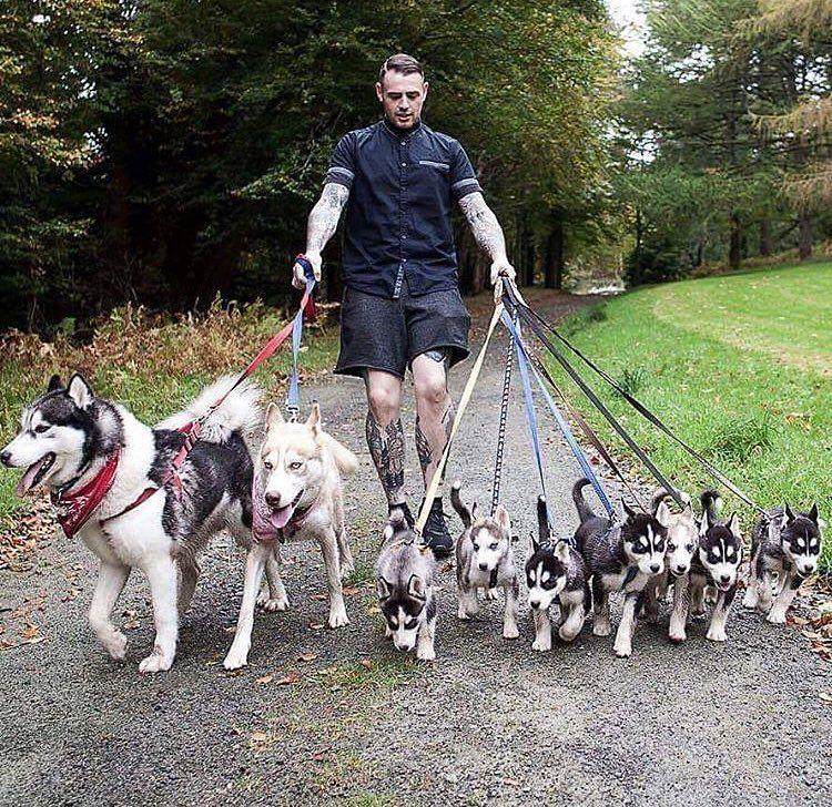 @husky.heaven COMMENT ÉDUQUER SON CHIEN EN SEULEMENT 15 MINUTES PAR JOUR ! Une éducatrice professionnelle va vous aider à éduquer votre chiot ou votre chien… Si vous voulez éduquer votre chien ou votre chiot, 🐶 cliquer sur le lien ⏭⏭ 🛑lien sécurisé🛑 #chien #toutou #chiot #dressage #animaux #dogs #Husky #retriever