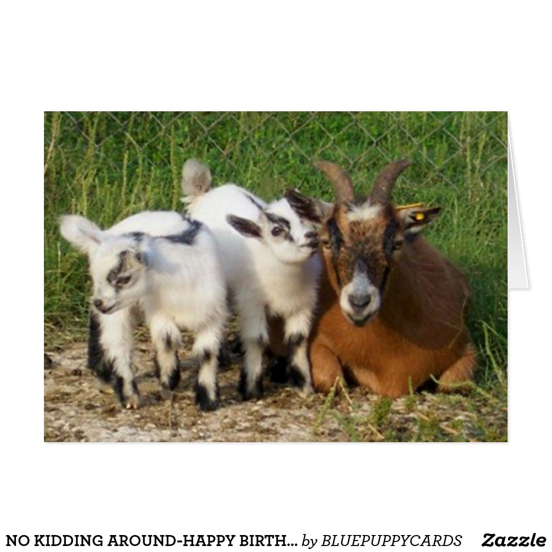 No kidding around happy birthday card greeting cards and more no kidding around happy birthday card bookmarktalkfo Image collections