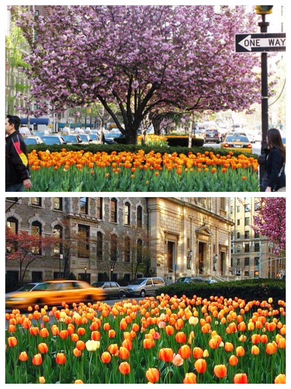 Spring Flowers On Park Avenue In New York City New York City