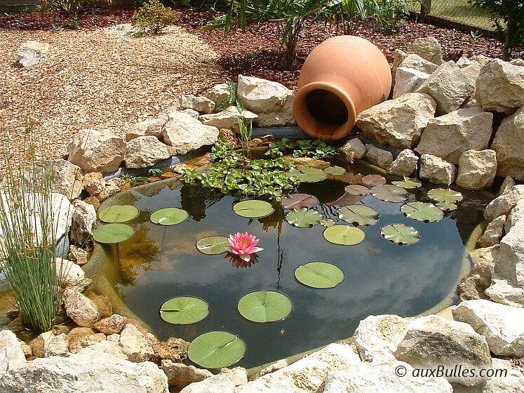 Pingl sur bassin de jardin - Plantes aquatiques pour bassin de jardin ...