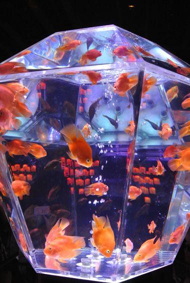 Art Aquarium Tokyo Japan Fish Tanks Pinterest Aquarium