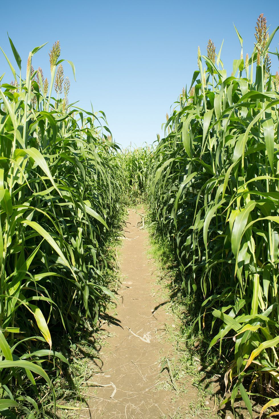 35 Best Corn Mazes Near You To Visit This Fall Funny Dating Memes Fall Dates Funny Dating Quotes