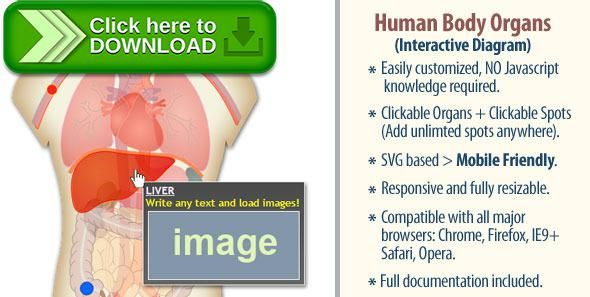 Free nulled interactive human body organs diagram download human free nulled interactive human body organs diagram download ccuart Choice Image