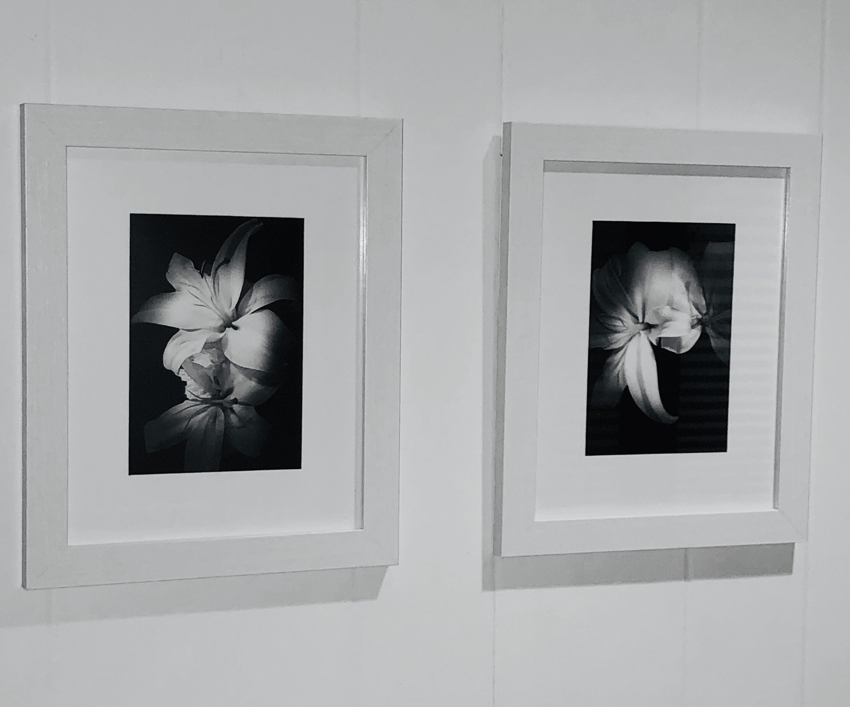 Framed Wall Art Lilly S Black And White Wall Art Decor Framing Photography