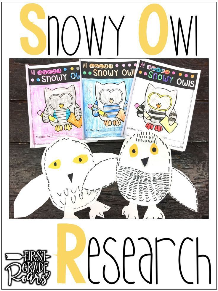 Arctic Snowy Owl-Informational Text Reading, Writing, & Research