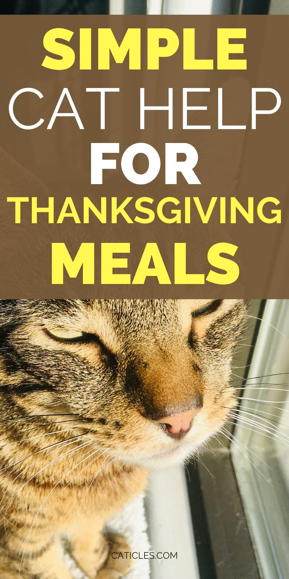 Thanksgiving Dinner for Cats in 2020 Homemade cat food