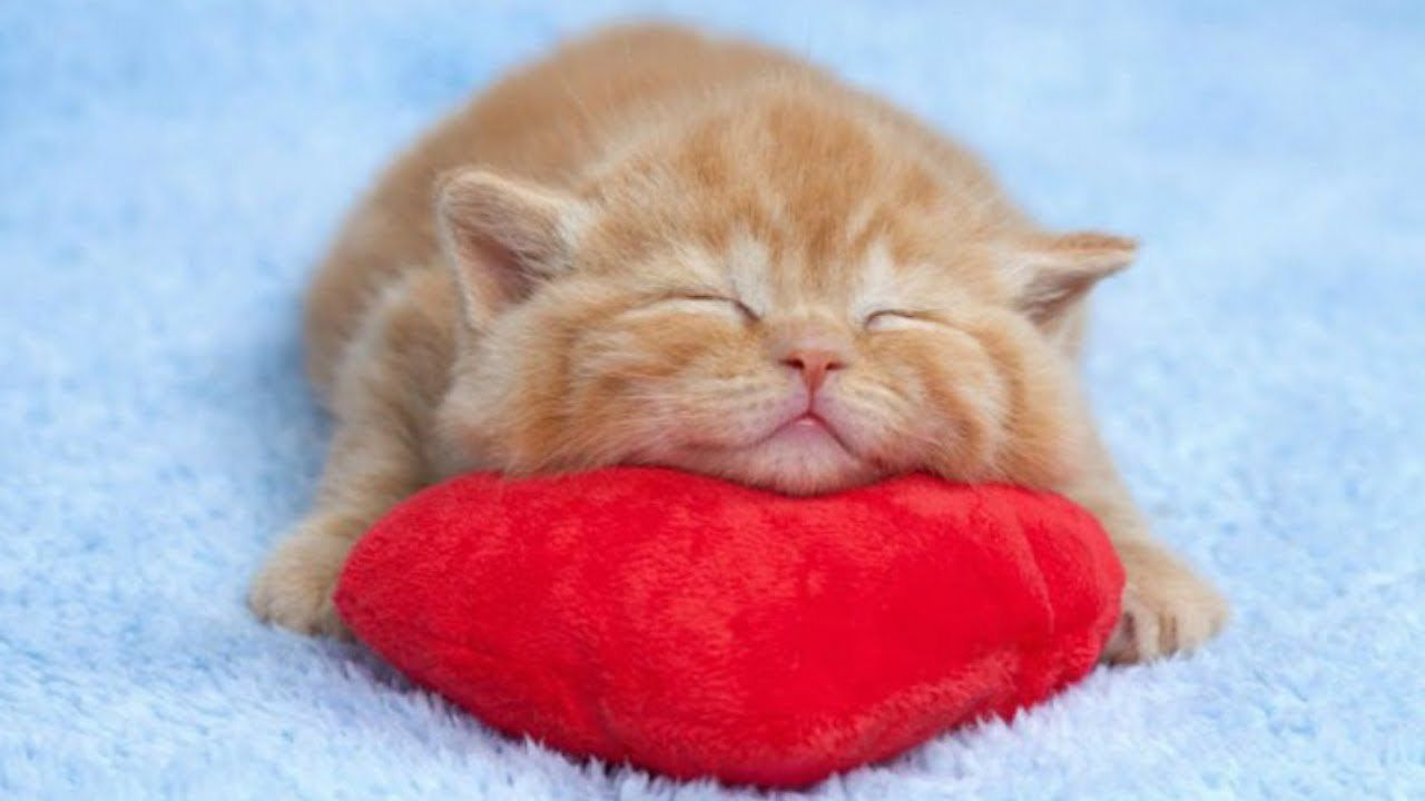 Cute Kittens Sleeping In Most Adorable Ways Too Cute Kittens Cutest Cute Cats Cats