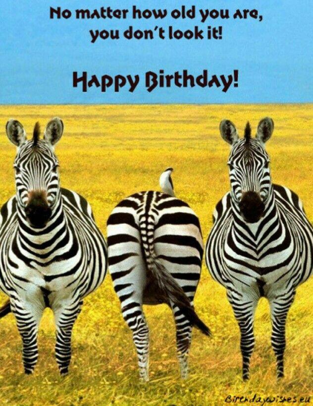Happy Birthday Animals Wild Animals Beautiful Animals
