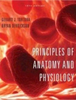 Pin by Nathan Zarnoski on Anatomy | Anatomy, physiology