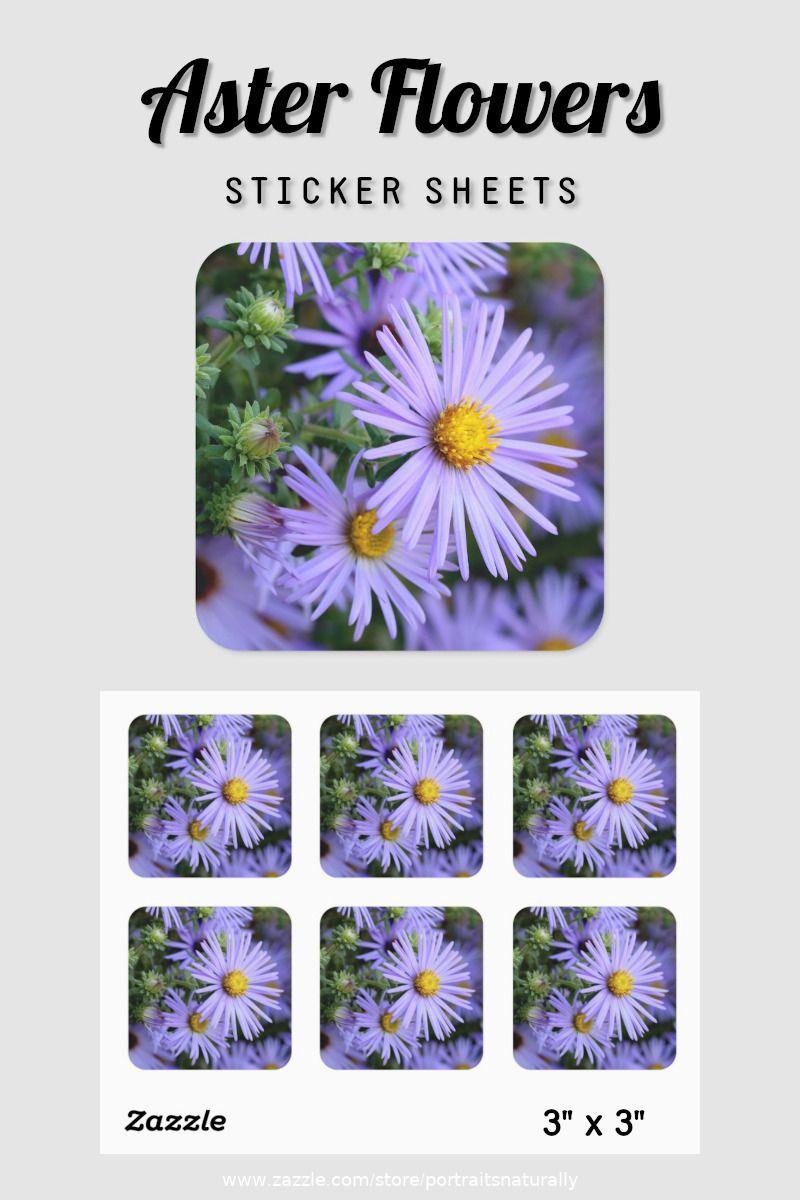 Pretty Aster Flowers Classic Round Sticker Zazzle Com In 2020 Aster Flower Sticker Sheets Custom Stickers