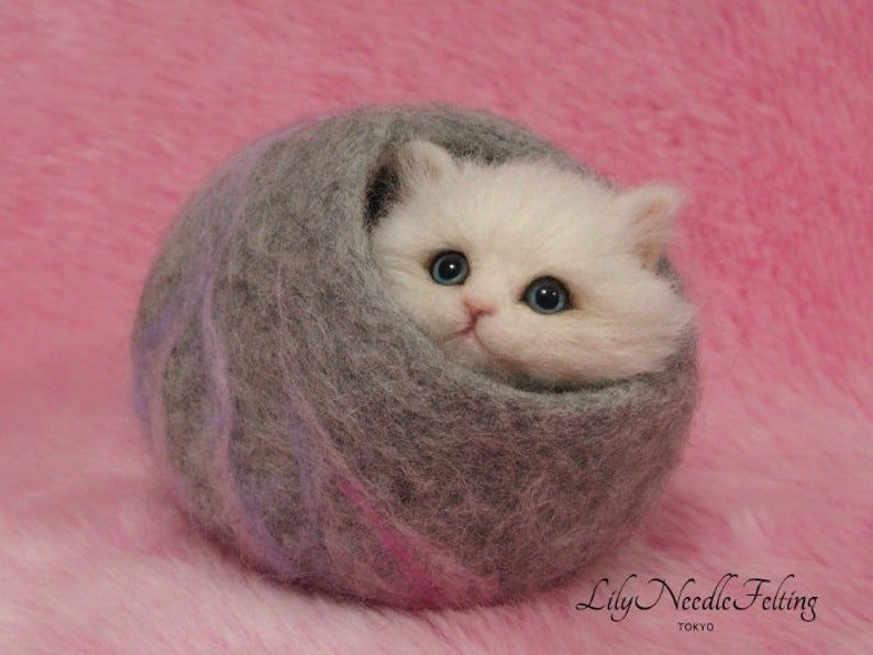 Needel Felted Kitten in Cat Cave: Miniature Needle Felt Cat, Needle Felting #needlefeltedcat Needel Felted Kitten in Cat Cave: Miniature Needle Felt Cat | Etsy #needlefeltedcat Needel Felted Kitten in Cat Cave: Miniature Needle Felt Cat, Needle Felting #needlefeltedcat Needel Felted Kitten in Cat Cave: Miniature Needle Felt Cat | Etsy #needlefeltedcat Needel Felted Kitten in Cat Cave: Miniature Needle Felt Cat, Needle Felting #needlefeltedcat Needel Felted Kitten in Cat Cave: Miniature Needle Fe #needlefeltedcat